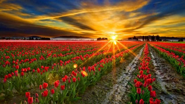 gorgeous-glowing-sunrise-facebook-timeline-cover,1366x768,67100