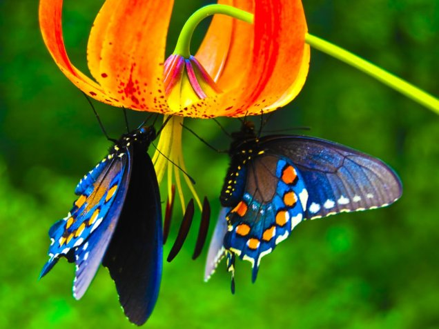 Beautiful-Butterflies-butterflies-9481730-1600-1200