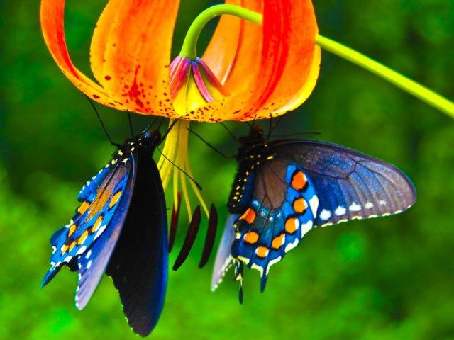 Beautiful-Butterflies-butterflies-9481730-1600-1200