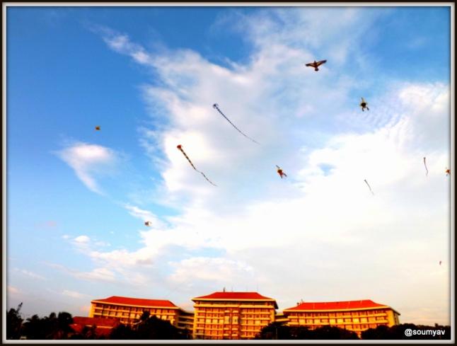 kites flying high