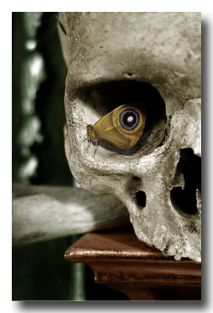 skull-with-butterfly-eye-copy
