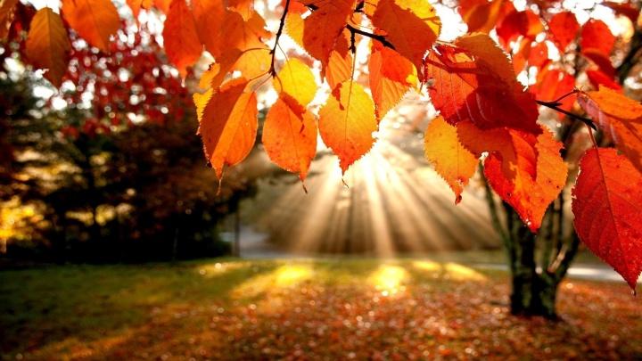 japan-autumn-leaves