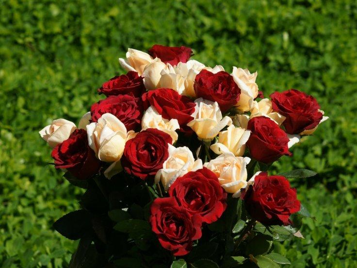 rose bouquet wallpaper