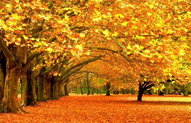 fall-colours-800