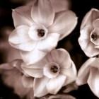 timeless-love-ii-by-jennifer-broussard-673389