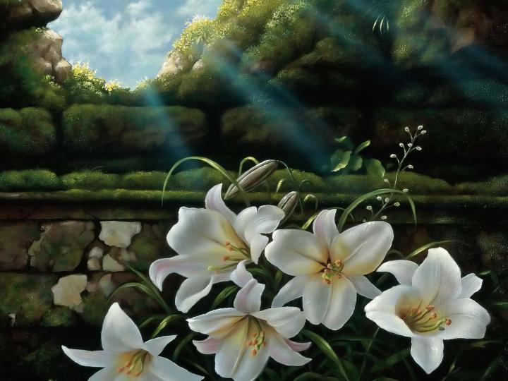 White_lilies_windows_wallpaper