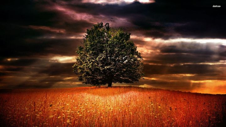 6708-tree-of-life-1920x1080-nature-wallpaper